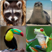 Animals Memory Game 1.0 APK MODs Unlimited Money Hack Download for android