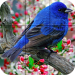 Puzzle – Birds 1.20 APK MODs Unlimited Money Hack Download for android