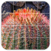 Tile Puzzles Cactus 1.40.ct APK MODs Unlimited Money Hack Download for android