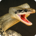 Anaconda Rampage Giant Snake Attack 2.112 APK MODs Unlimited Money Hack Download for android
