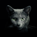 Find a Cat 5.8.3 APK MODs Unlimited Money Hack Download for android